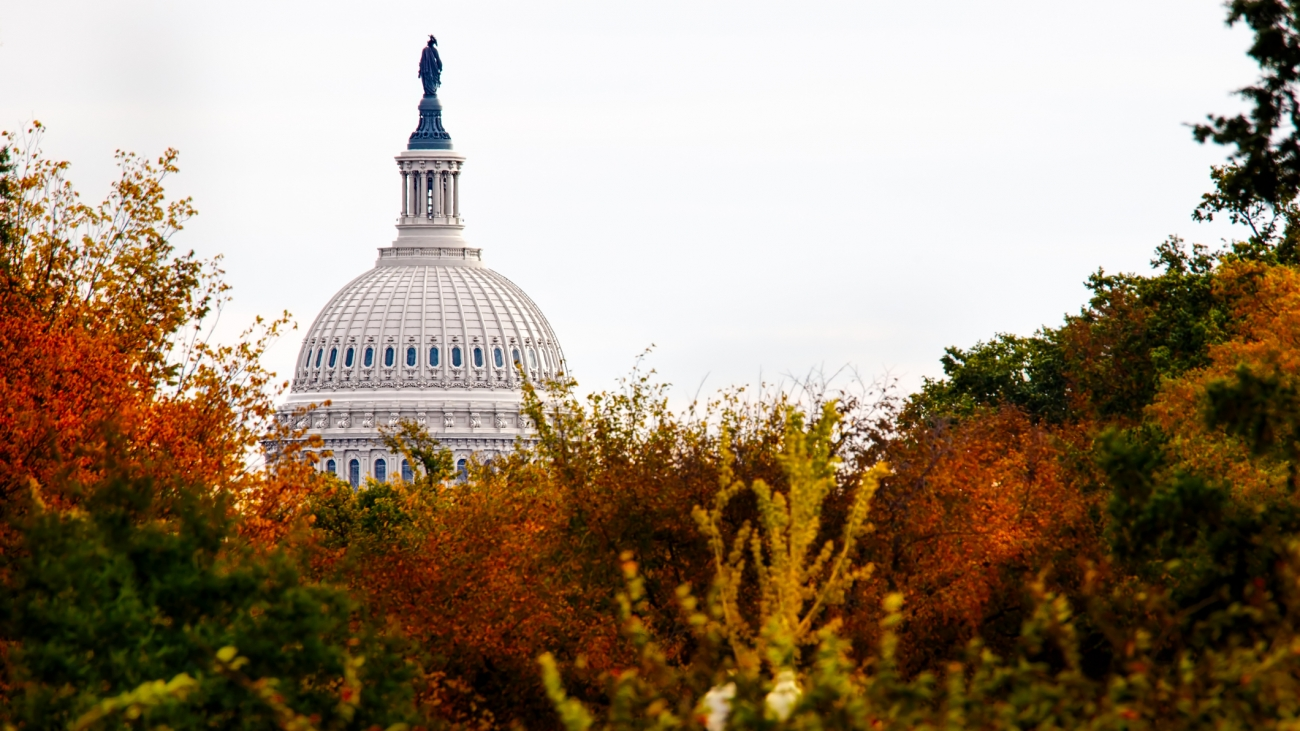 The dome of the US Capitol obscured by the trees of Washington, DC.